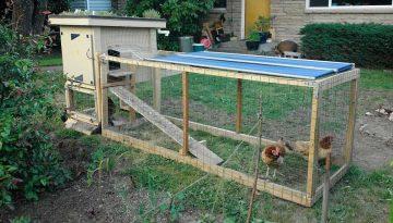 chicken-coop6